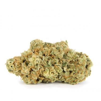 Moby Dick Sativa